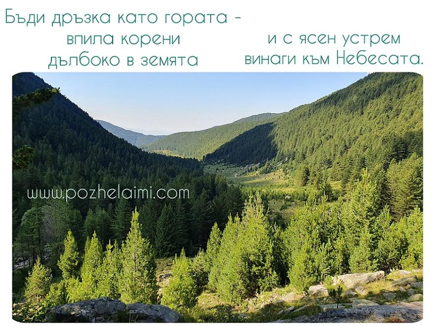 Бъди дръзка като гората